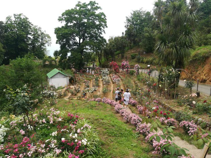 Różarium, Ogród Botaniczny w Batumi